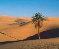 O Pão no Deserto